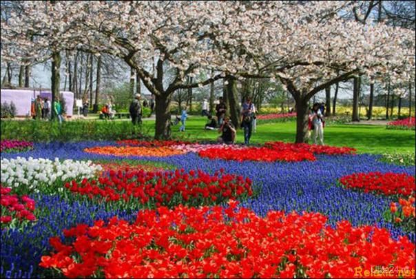 сад Кёкенхоф, Голландия МАГАЗИН ПУТЁВОК, ТУРИСТИЧЕСКОЕ АГЕНТСТВО Ухта