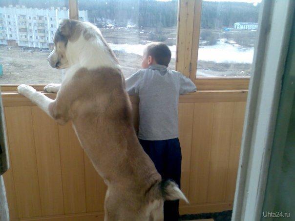 сын и пес  Ухта