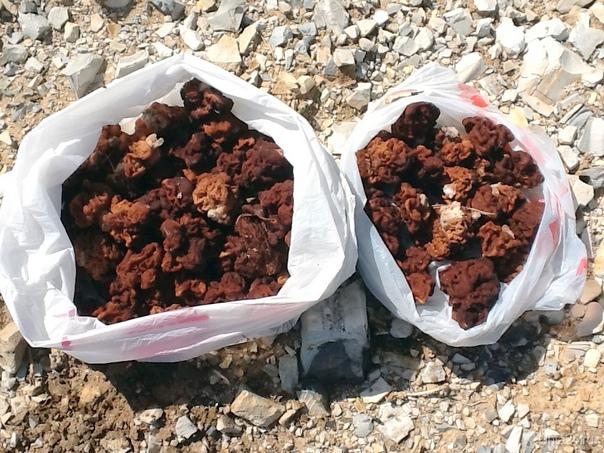 Первый урожай! май 2012 Природа Ухты и Коми Ухта