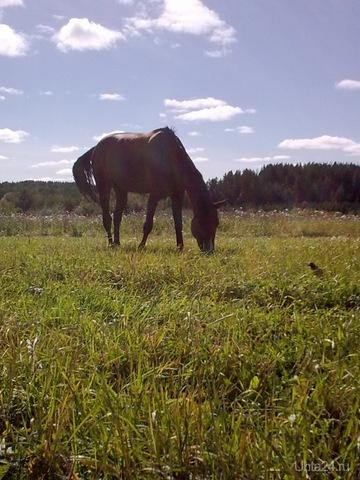 на лугу пасутся кони!  Ухта