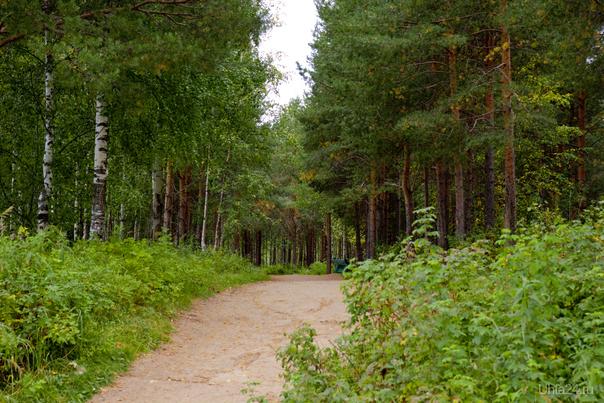 Сказочная тропа к источнику. Природа Ухты и Коми Ухта