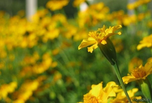 Желто-зелено Природа Ухты и Коми Ухта