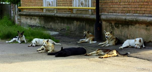 Бездомные собаки Ухта