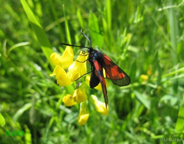 Разноцветное лето Природа Ухты и Коми Ухта