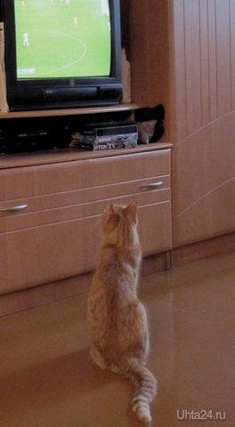 Наш кот Рыжик : Ну, вот, опять наши проигрывают. Питомцы Ухта