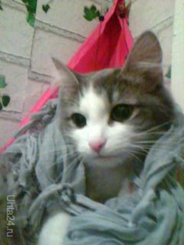 Алиска очень умная и красивая кошечка) Питомцы Ухта
