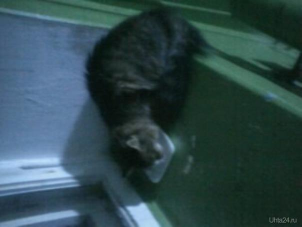 В посёлке Ярега на Нефтяников,11 в 3 подъезд кто-то подбросил кошечку.Её уже несколько раз выгоняли,но я запускаю. ДОБРЫЙ ГОРОД, ОБЩЕСТВЕННАЯ ГРУППА Ухта