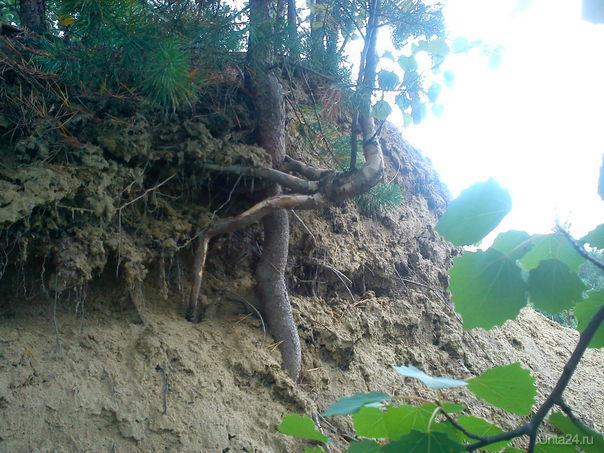 сила жизни Природа Ухты и Коми Ухта