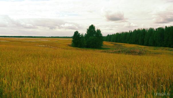 поле.разнообразие цветов - белый, желтый, оранжевый, зелёный, красный. К сожалению вид сверху снять было не возможно =) Природа Ухты и Коми Ухта