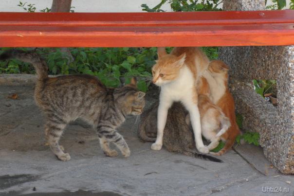 Болгария. Кошка живет на территории мужского монастыря Питомцы Ухта