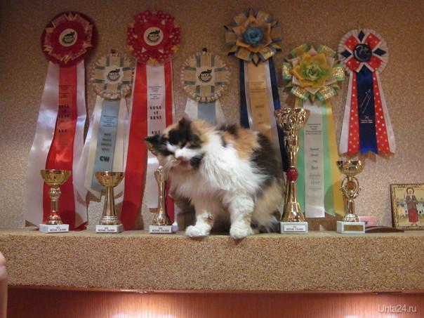 Международная выставка кошек в Сыктывкаре 22-23 сентября 2012 Мероприятия Ухта