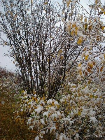 Скоро, совсем скоро наступит зима. Снимок сделан в 2008 году. Природа Ухты и Коми Ухта