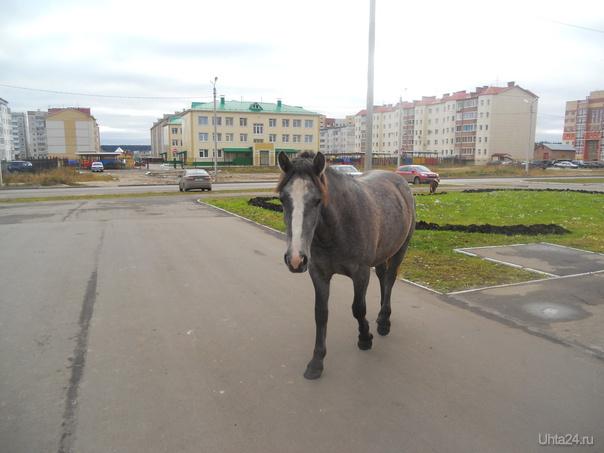 Это лошадь, она желает общения Питомцы Ухта