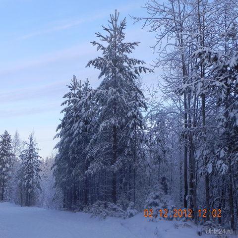 Мороз Природа Ухты и Коми Ухта