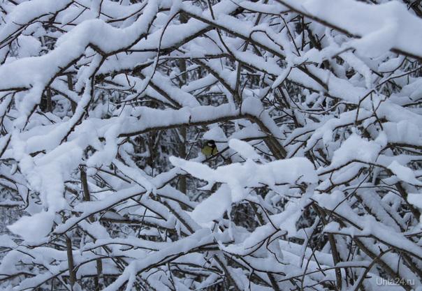 В лесу. 4.12.12 Природа Ухты и Коми Ухта