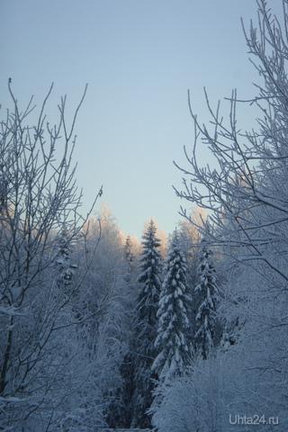 декабрьский мороз Природа Ухты и Коми Ухта