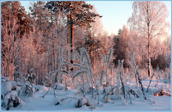 картины зимы Природа Ухты и Коми Ухта
