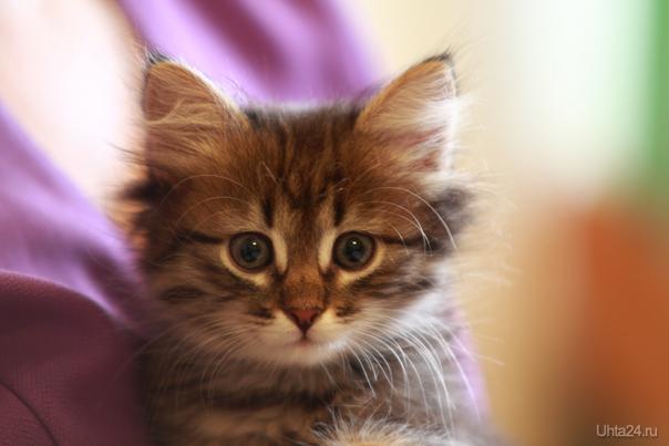 Моя кошка Питомцы Ухта
