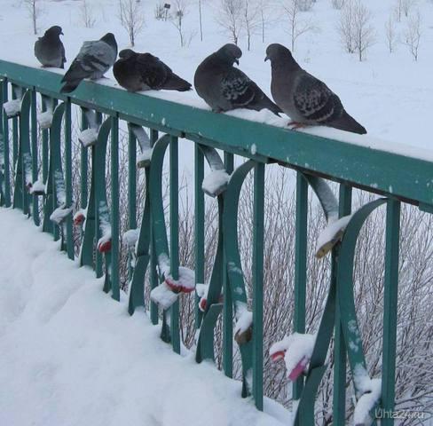 На мосту ,где влюбленные нашего города оставляют свои замочки в знак своей долгой и взаимной любви,увидела двух голубков,так преданно смотрящих друг на друга.Как приятно было наблюдать за ними.Любви да согласия!!!  Ухта