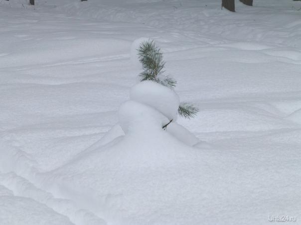 А ведь, скоро все растает.Но,пока в лесу, так красиво, белый снег,красивые сугробы  и заснеженные деревья. Природа Ухты и Коми Ухта