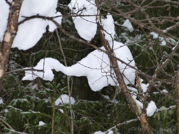 Снежный слон гулял по лесу. Природа Ухты и Коми Ухта