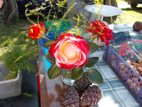 Розы председателя Творчество, хобби Ухта