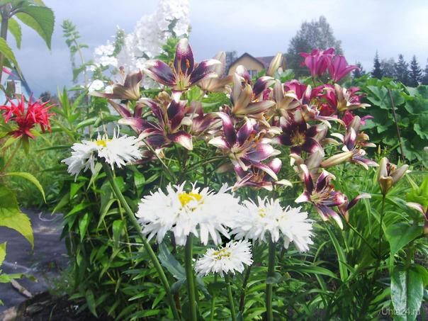 Цветы на даче Творчество, хобби Ухта