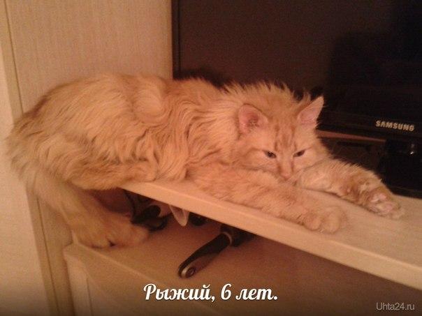Еще в древние времена считалось, что рыжая кошка – это опора и надежда всех страждущих и больных, а позднее их даже возвели в ранг целителей. Наш рыжик поистине волшебный кот. Яркий,умный,добрый,любознательный,спокойный и очень воспитанный-о нем можно говорить много.Котик с Тимирязева, 10, п. Шудаяг, 6 лет, немного осталось до лечить ушки еще, пока не кастрирован. На передержке у Ольги Косныревой http://vk.com/id316883  ЗАБОТА, ПОМОЩЬ БЕЗДОМНЫМ ЖИВОТНЫМ Ухта