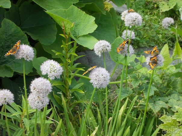 Бабочки, лето Разное Ухта
