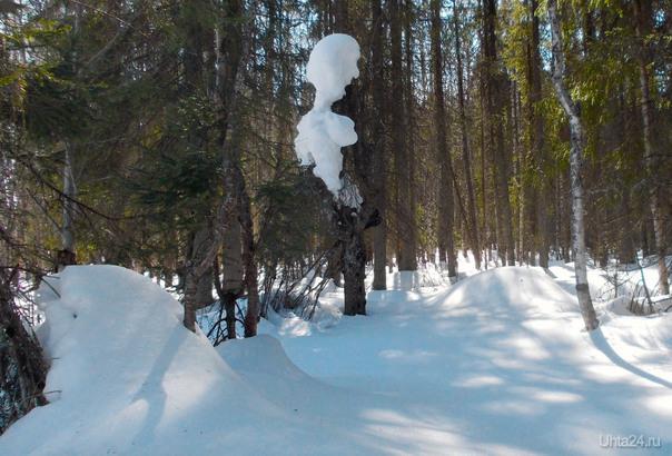 Лес. Последние дни зимы в середине апреля. Природа Ухты и Коми Ухта