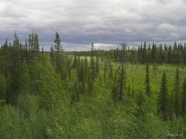 сказочный лес Природа Ухты и Коми Ухта