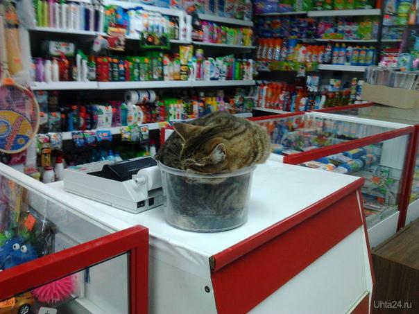 Кот в магазине Питомцы Ухта