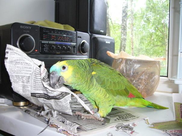 Читаем прессу! Природа Ухты и Коми Ухта