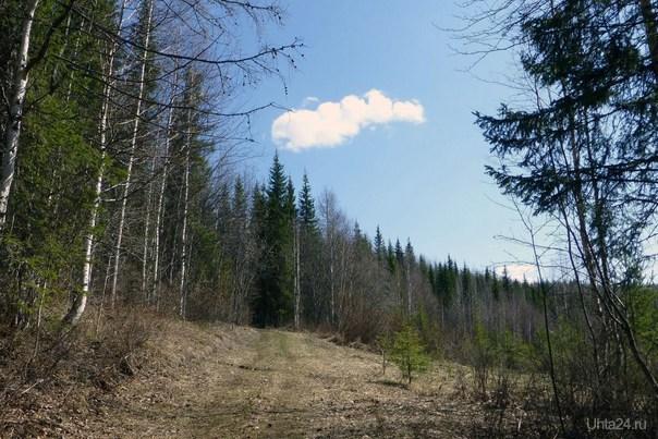 Облако. Природа Ухты и Коми Ухта