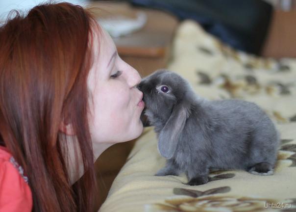 Мой кролик-Луша)))...порода Карликовый Баран ST NHD,окрас голубой мардер))) Питомцы Ухта