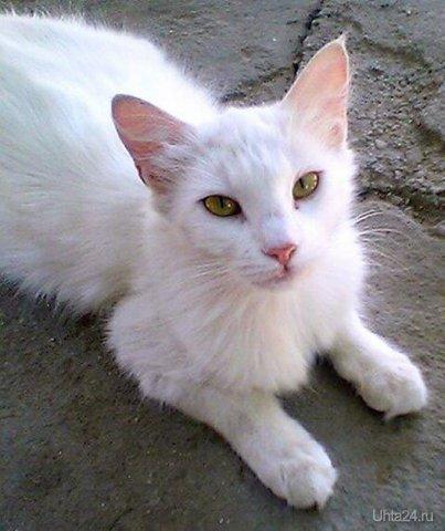 Кошка Марта Питомцы Ухта
