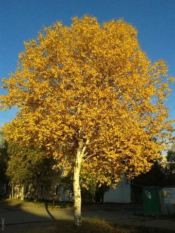 золотая осень! Природа Ухты и Коми Ухта