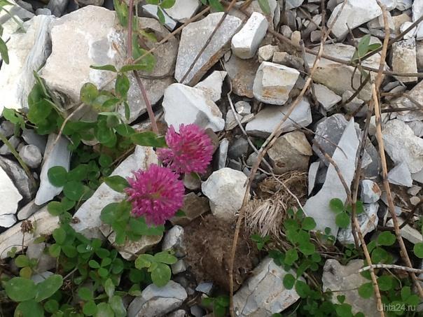 Последние цветы осени.17 сент 2013 Природа Ухты и Коми Ухта