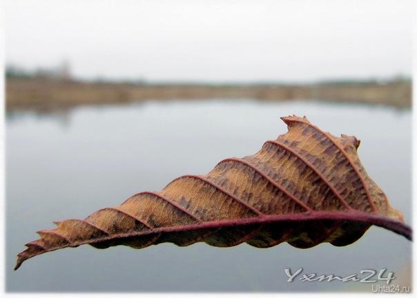 2012г. Октябрь листок в ракушку крутит. Мечты о море... Осень шутит... Природа Ухты и Коми Ухта
