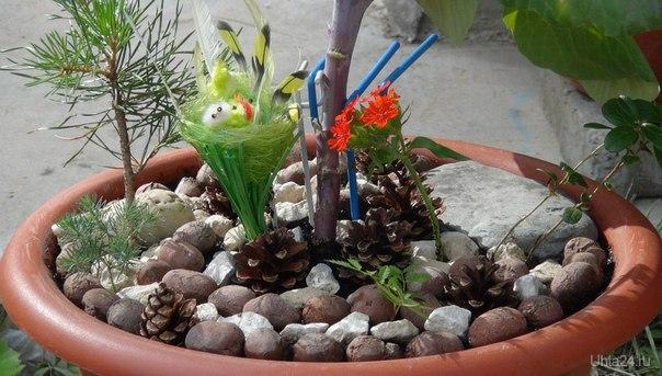 Ландшафтный дизайн в миниатюре на даче. Украсила вазон с цветной капустой. Природа Ухты и Коми Ухта