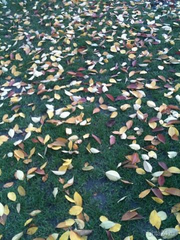 Осенний ковер Разное Ухта