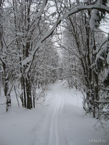 Лыжня Природа Ухты и Коми Ухта