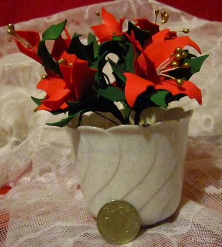 Пуансеттия-Рождественская звезда.  Ухта