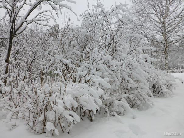 Снегопад Элеонора Фарджен  Снег идёт, снег идёт, Снег по свету бродит. И откуда он идёт И куда уходит? Снегопад, снегопад, Снежное паденье. Снег идёт наугад, Словно сновиденье. Сны земли, сны небес Видит, засыпая, Белый сад, белый лес Снегом засыпая.   Ухта