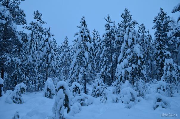 снежно. Природа Ухты и Коми Ухта