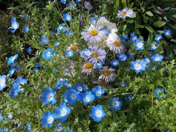 Лето, цветы Разное Ухта