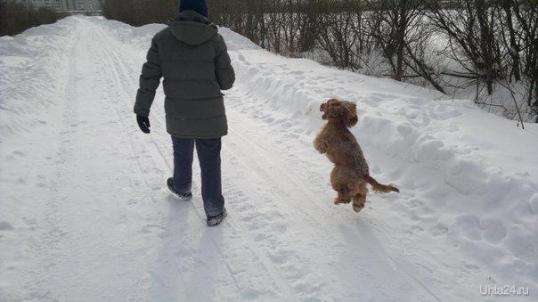 Почему собаки не летают как птицы?... Питомцы Ухта