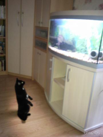 Удивленная кошка, где рыба?  Питомцы Ухта