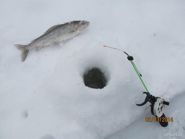 рыбалочка Природа Ухты и Коми Ухта