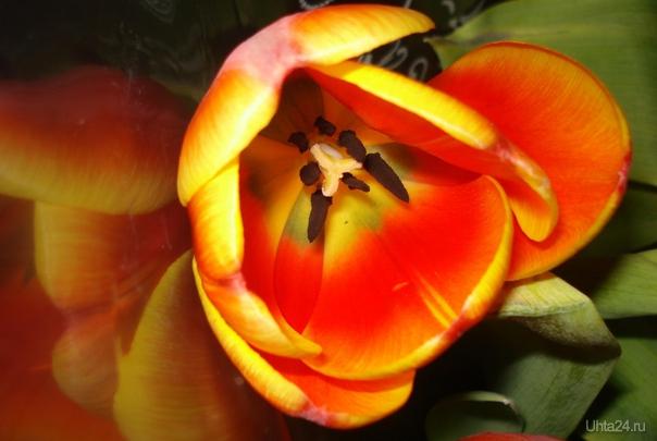 Журчание ручьев прозрачных, Мир пробуждая ото сна, Улыбкой солнца в небе мрачном Верх над зимой берет весна. Весна приносит обновленье, Улыбки, счастье и цветы. И я хочу, чтоб в день весны рождения Ваши исполнились мечты!   Ухта